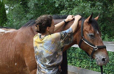 Tellington Methode hilft Pferden