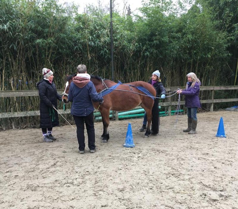 """Für sehr sensible Pferde kann man zum """"Einfahren"""" auch mal vier Personen benötigen"""