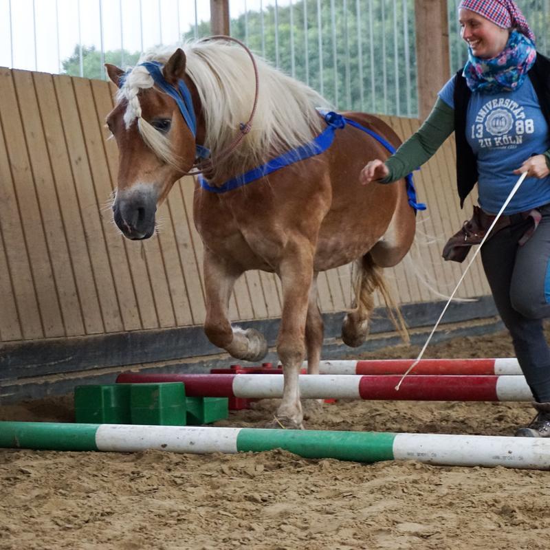 Bewegungsfreude für Mensch und Pferd