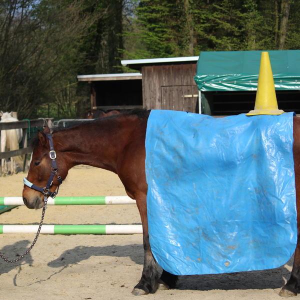 Tellington ausgebildete Pferde sind durch nichts zu erschüttern