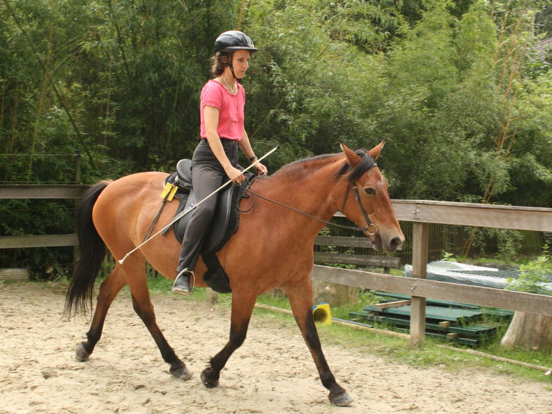Auch mit Ende 20 kann ein Pferd noch schwungvoll gehen