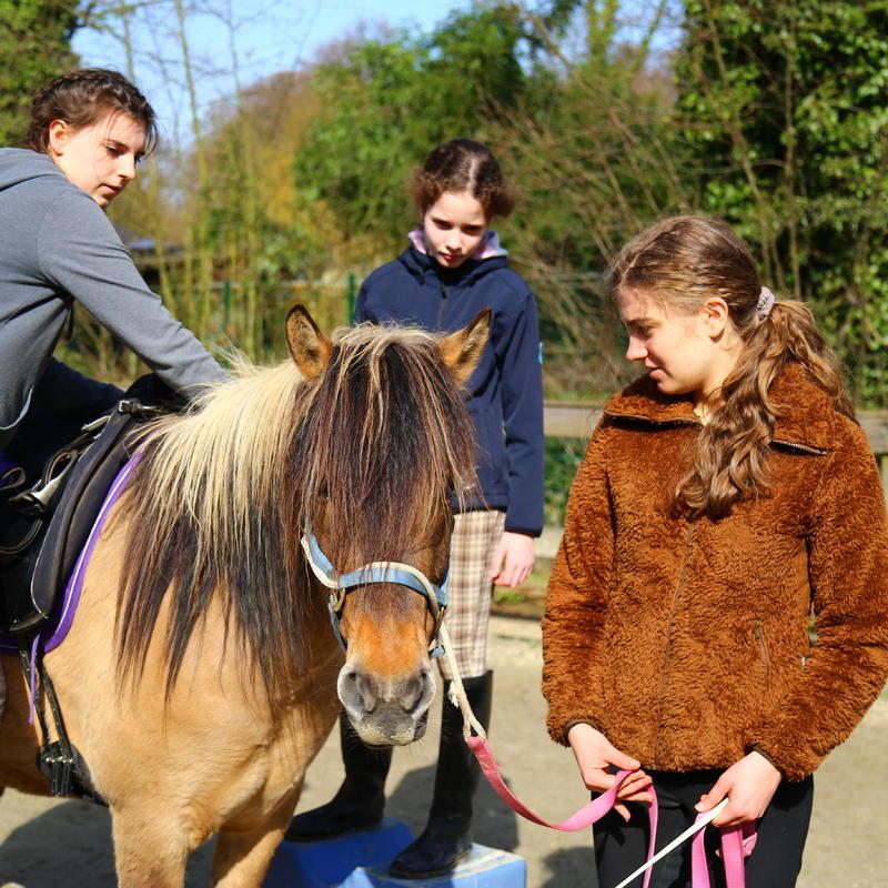 Fortgeschrittene Kinder lernen auch, sie man Pferde zum Einreiten vorbereitet